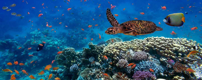 Diving destinations: Finding the best spots for scuba