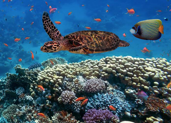 Scuba libre! Finding the best spots for diving
