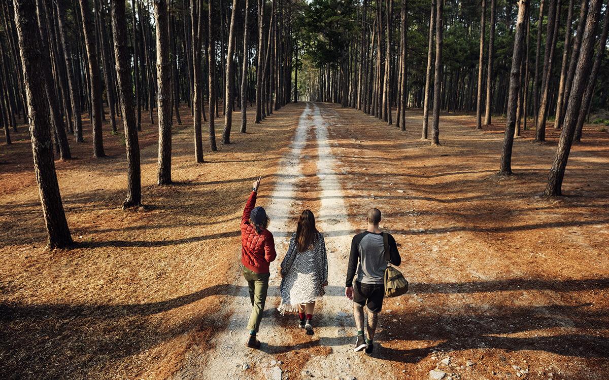 people walking through the woods