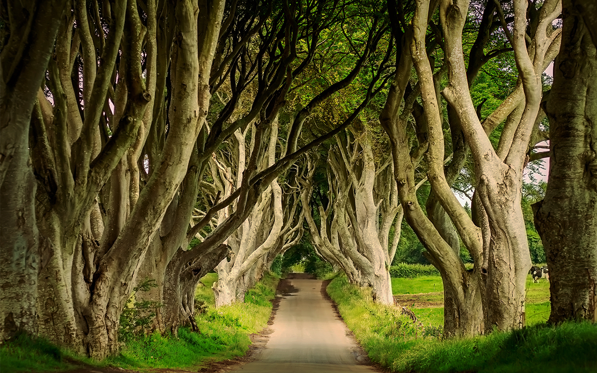 The Dark Hedges are one of the most recognised places in the world