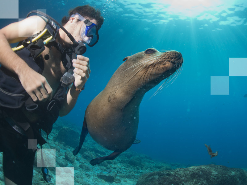 Swimming with the playful sea lions is a must for all the puppy-loving travellers out there