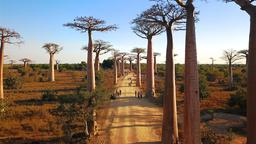 Find cheap flights from Birmingham to Madagascar