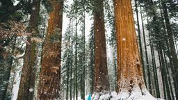 Sequoia National Park holiday rentals