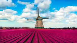 Find cheap flights from London Stansted Airport to Netherlands